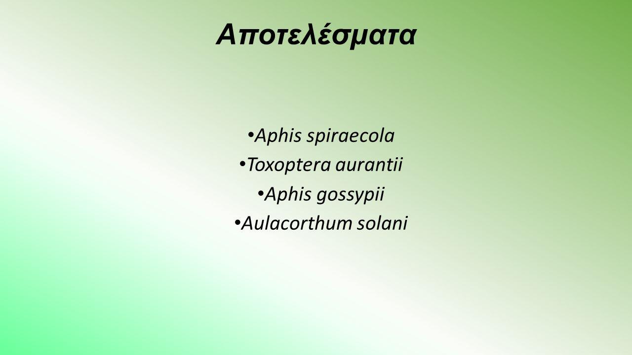 Αποτελέσματα Aphis spiraecola Toxoptera aurantii Aphis gossypii Aulacorthum solani