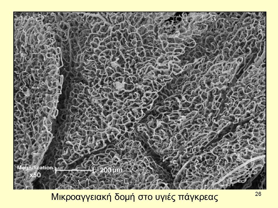 26 Μικροαγγειακή δομή στο υγιές πάγκρεας