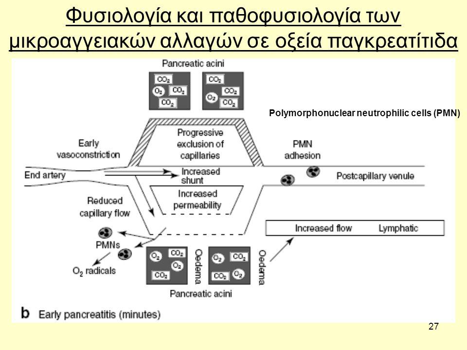 27 Φυσιολογία και παθοφυσιολογία των μικροαγγειακών αλλαγών σε οξεία παγκρεατίτιδα Polymorphonuclear neutrophilic cells (PMN)