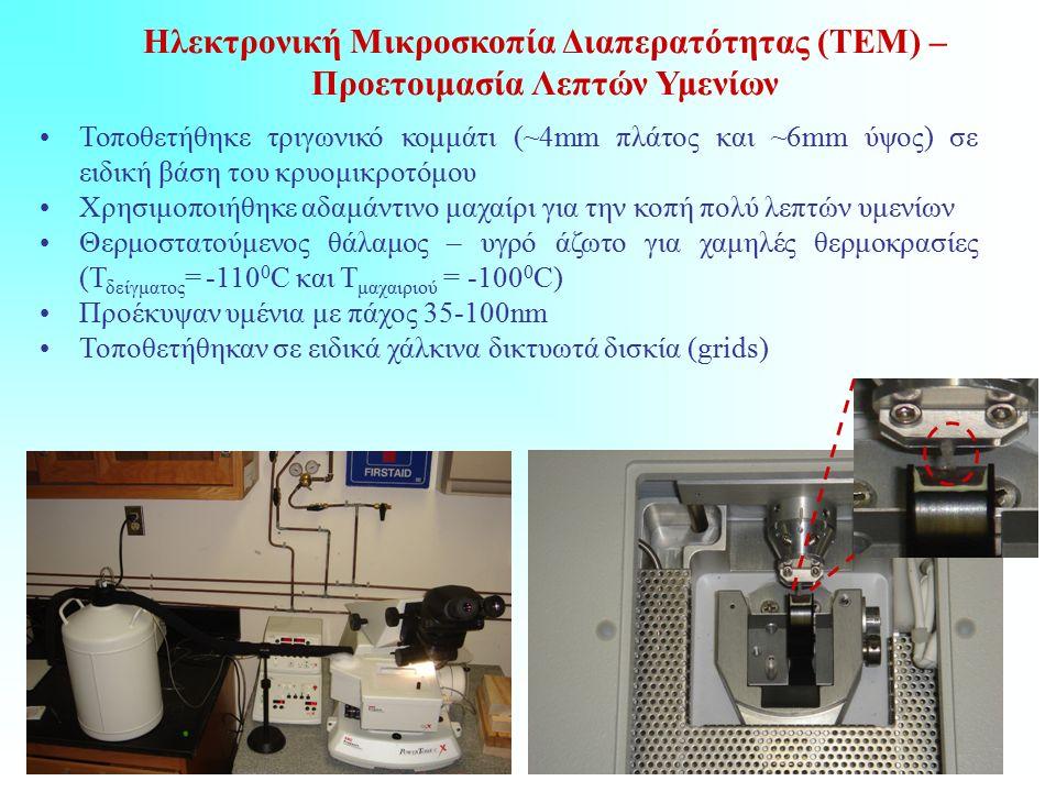 Ηλεκτρονική Μικροσκοπία Διαπερατότητας (ΤΕΜ) – Προετοιμασία Λεπτών Υμενίων Τοποθετήθηκε τριγωνικό κομμάτι (~4mm πλάτος και ~6mm ύψος) σε ειδική βάση του κρυομικροτόμου Χρησιμοποιήθηκε αδαμάντινο μαχαίρι για την κοπή πολύ λεπτών υμενίων Θερμοστατούμενος θάλαμος – υγρό άζωτο για χαμηλές θερμοκρασίες (Τ δείγματος = -110 0 C και Τ μαχαιριού = -100 0 C) Προέκυψαν υμένια με πάχος 35-100nm Τοποθετήθηκαν σε ειδικά χάλκινα δικτυωτά δισκία (grids)