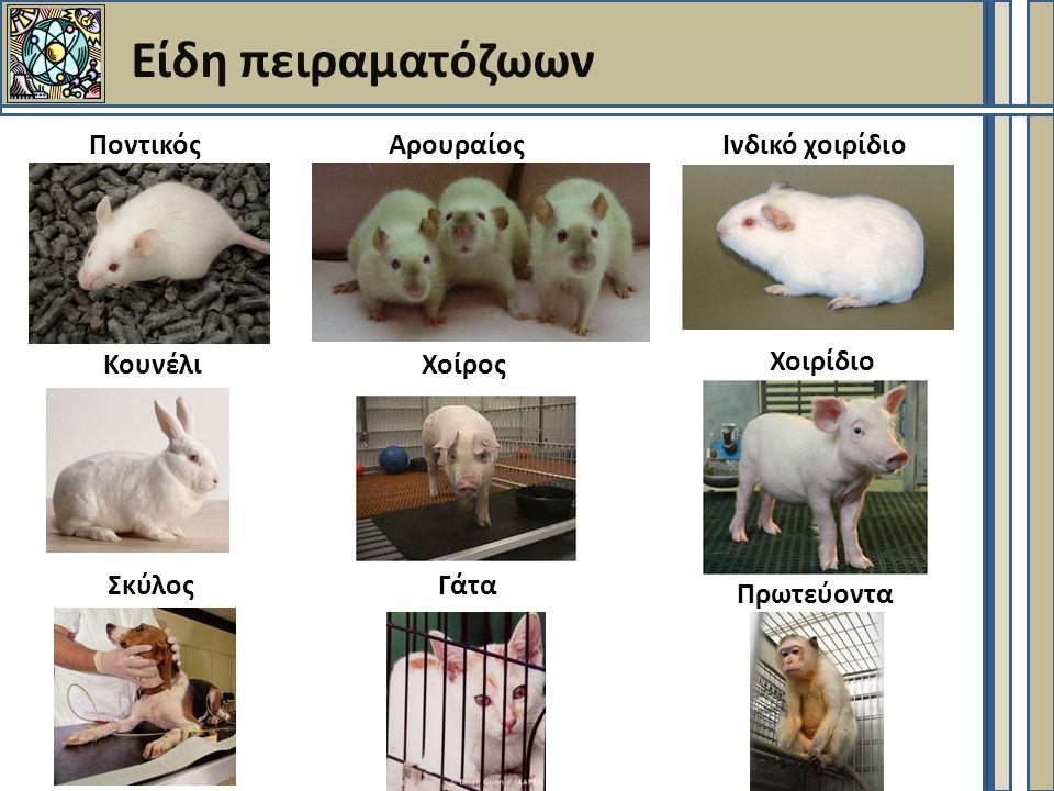 Είδη πειραματόζωων ΠοντικόςΑρουραίοςΙνδικό χοιρίδιο ΓάταΣκύλος ΚουνέλιΧοίρος Χοιρίδιο Πρωτεύοντα