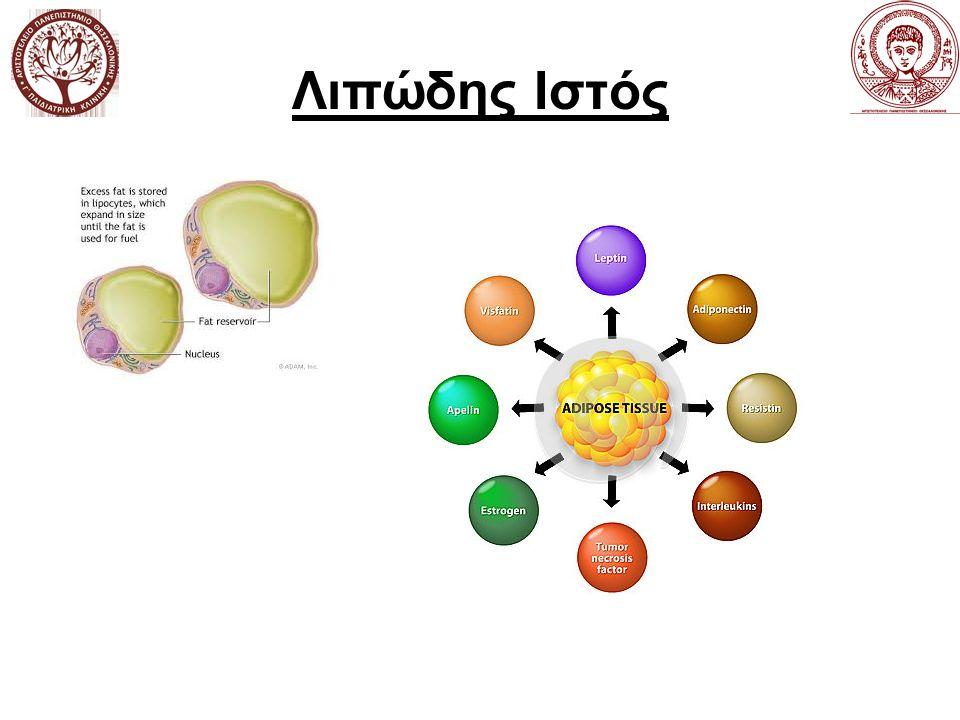 Λιποκίνες Βιολογικά δραστικά πεπτίδια εκκρινόμενα από τον λιπώδη ιστό Ανακαλύφτηκαν πρόσφατα και ακόμη διερευνάται η δομή τους και ο ενεργειακός τους ρόλος (λεπτίνη,1995) Δράσεις αυτοκρινείς, παρακρινείς και ενδοκρινείς Κλασσικές (TNFa, IL6), Χημειοκίνες (ΜCP-1),Αγγειακή αιμόσταση (ΡΑΙ-1), Ρύθμιση Αρτηρ.