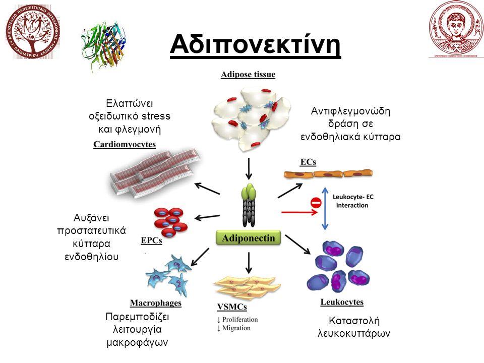Αδιπονεκτίνη Αντιφλεγμονώδη δράση σε ενδοθηλιακά κύτταρα Παρεμποδίζει λειτουργία μακροφάγων Ελαττώνει οξειδωτικό stress και φλεγμονή Αυξάνει προστατευτικά κύτταρα ενδοθηλίου Καταστολή λευκοκυττάρων