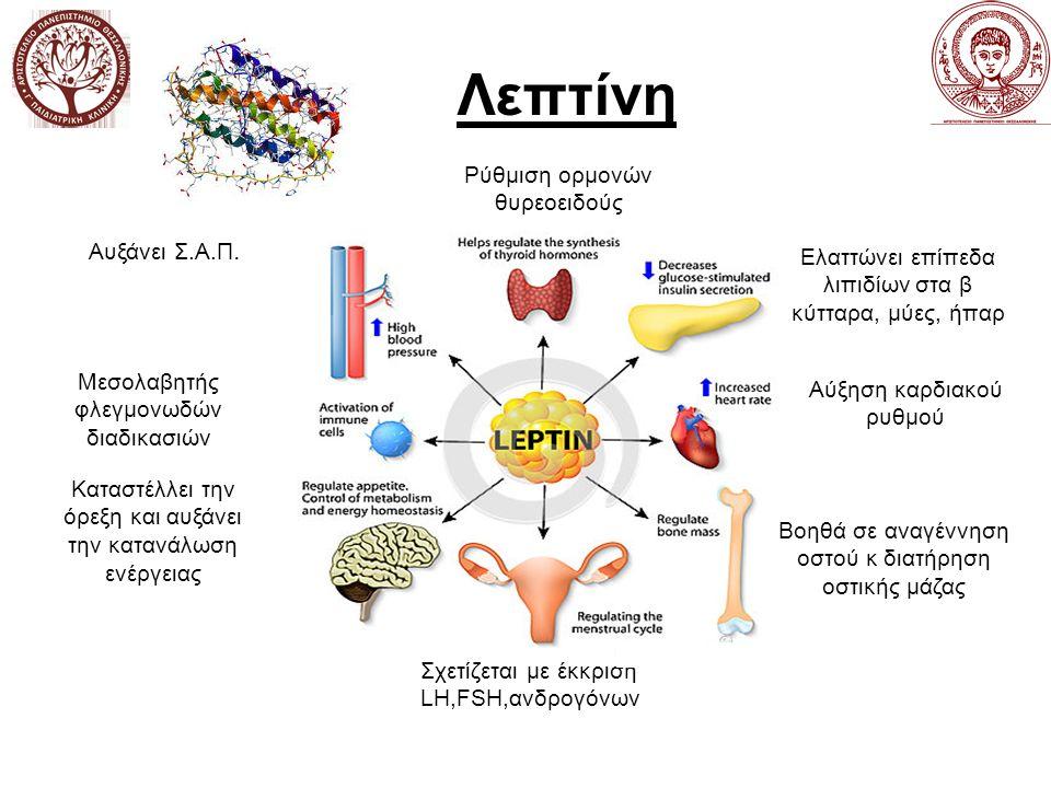 Λεπτίνη Σχετίζεται με έκκριση LH,FSH,ανδρογόνων Καταστέλλει την όρεξη και αυξάνει την κατανάλωση ενέργειας Ελαττώνει επίπεδα λιπιδίων στα β κύτταρα, μύες, ήπαρ Μεσολαβητής φλεγμονωδών διαδικασιών Αυξάνει Σ.Α.Π.