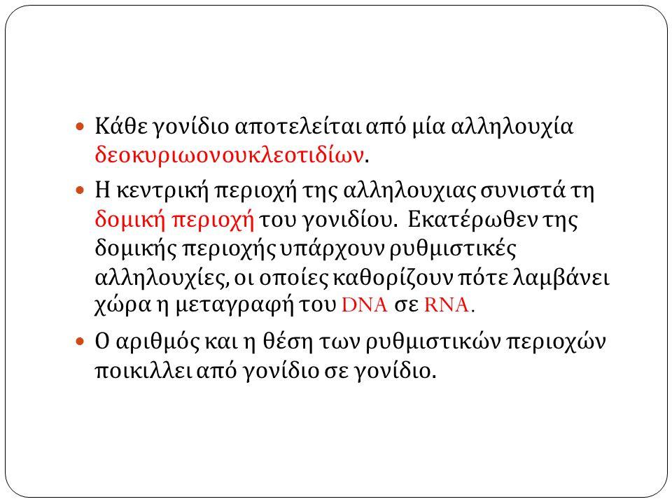 Κάθε γονίδιο αποτελείται από μία αλληλουχία δεοκυριωονουκλεοτιδίων.