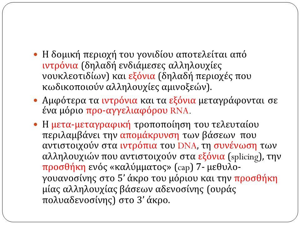 Η δομική περιοχή του γονιδίου αποτελείται από ιντρόνια ( δηλαδή ενδιάμεσες αλληλουχίες νουκλεοτιδίων ) και εξόνια ( δηλαδή περιοχές που κωδικοποιούν αλληλουχίες αμινοξεών ).