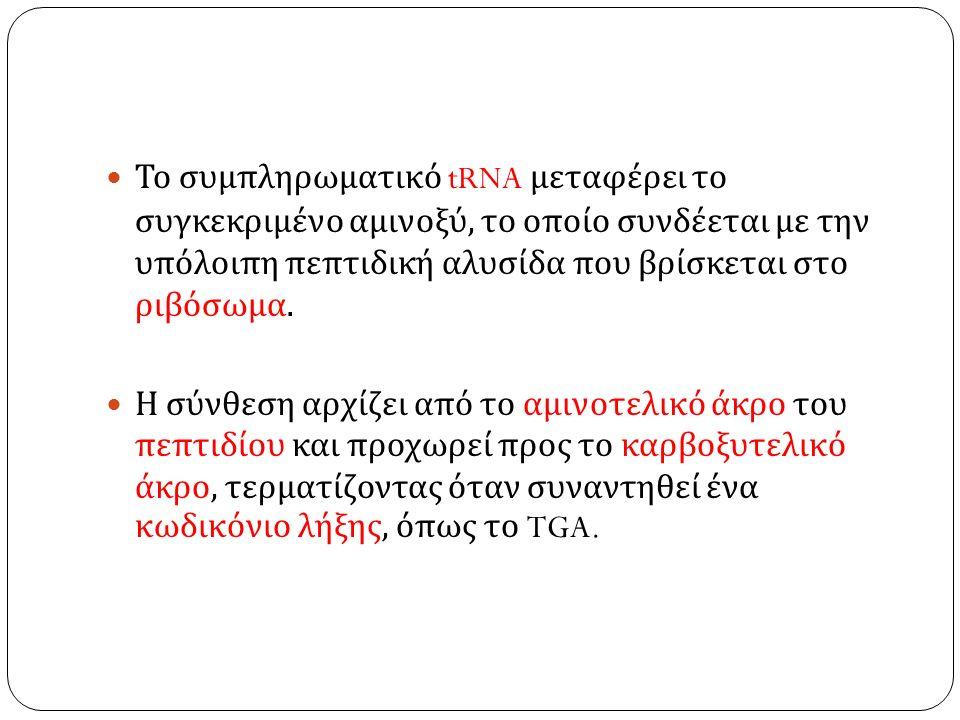 Το συμπληρωματικό tRNA μεταφέρει το συγκεκριμένο αμινοξύ, το οποίο συνδέεται με την υπόλοιπη πεπτιδική αλυσίδα που βρίσκεται στο ριβόσωμα.