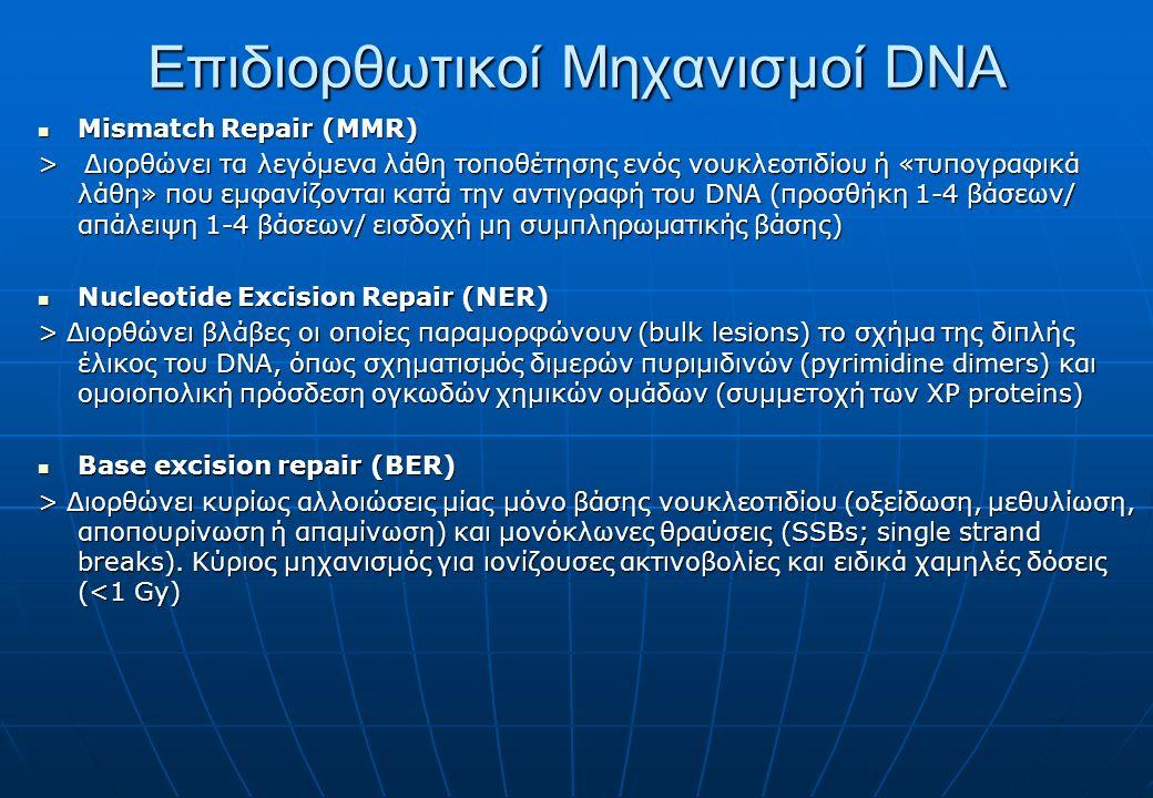 Επιδιορθωτικοί Μηχανισμοί DNA Mismatch Repair (MMR) Mismatch Repair (MMR) > Διορθώνει τα λεγόμενα λάθη τοποθέτησης ενός νουκλεοτιδίου ή «τυπογραφικά λάθη» που εμφανίζονται κατά την αντιγραφή του DNA (προσθήκη 1-4 βάσεων/ απάλειψη 1-4 βάσεων/ εισδοχή μη συμπληρωματικής βάσης) Nucleotide Excision Repair (NER) Nucleotide Excision Repair (NER) > Διορθώνει βλάβες οι οποίες παραμορφώνουν (bulk lesions) το σχήμα της διπλής έλικος του DNA, όπως σχηματισμός διμερών πυριμιδινών (pyrimidine dimers) και ομοιοπολική πρόσδεση ογκωδών χημικών ομάδων (συμμετοχή των XP proteins) Base excision repair (BER) Base excision repair (BER) > Διορθώνει κυρίως αλλοιώσεις μίας μόνο βάσης νουκλεοτιδίου (οξείδωση, μεθυλίωση, αποπουρίνωση ή απαμίνωση) και μονόκλωνες θραύσεις (SSBs; single strand breaks).
