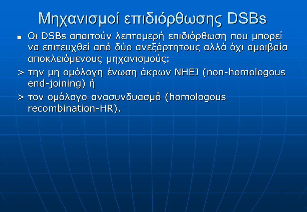 Μηχανισμοί επιδιόρθωσης DSBs Οι DSBs απαιτούν λεπτομερή επιδιόρθωση που μπορεί να επιτευχθεί από δύο ανεξάρτητους αλλά όχι αμοιβαία αποκλειόμενους μηχανισμούς: Οι DSBs απαιτούν λεπτομερή επιδιόρθωση που μπορεί να επιτευχθεί από δύο ανεξάρτητους αλλά όχι αμοιβαία αποκλειόμενους μηχανισμούς: > την μη ομόλογη ένωση άκρων NHEJ (non-homologous end-joining) ή > τον ομόλογο ανασυνδυασμό (homologous recombination-HR).