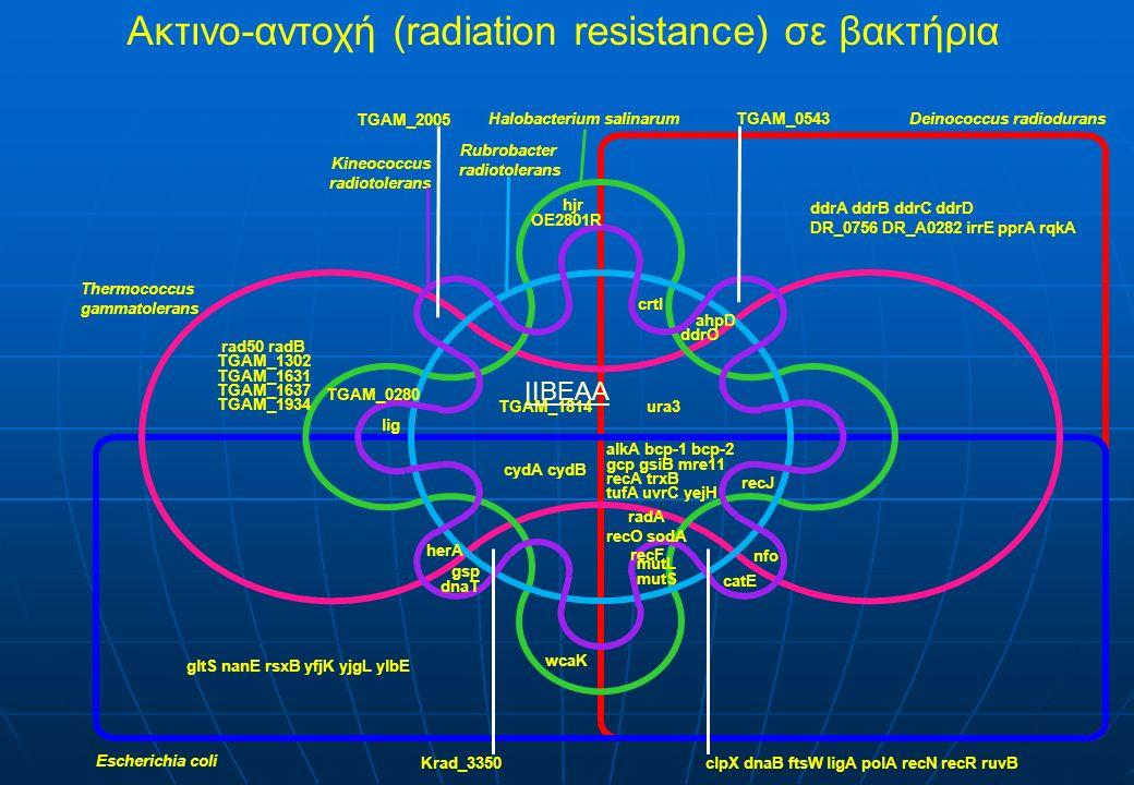 Ακτινο-αντοχή (radiation resistance) σε βακτήρια ΙΙΒΕΑΑ