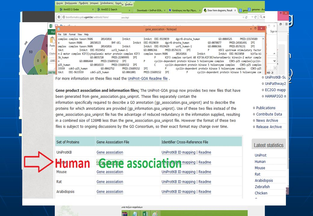 Firstly, we have to find the official Gene Ontology terms for each mechanism Firstly, we have to find the official Gene Ontology terms for each mechanism Then, from the QuickGO (http://www.ebi.ac.uk/GOA/downloads) download a file with data for the whole Human Genome (488082 entities) Then, from the QuickGO (http://www.ebi.ac.uk/GOA/downloads) download a file with data for the whole Human Genome (488082 entities)http://www.ebi.ac.uk/GOA/downloads Data has the following form Data has the following form But if copied and pasted to an excel sheet then it looks like But if copied and pasted to an excel sheet then it looks like Using a few lines' code in php we can create.txt files for each GO term, containing its associated proteins.