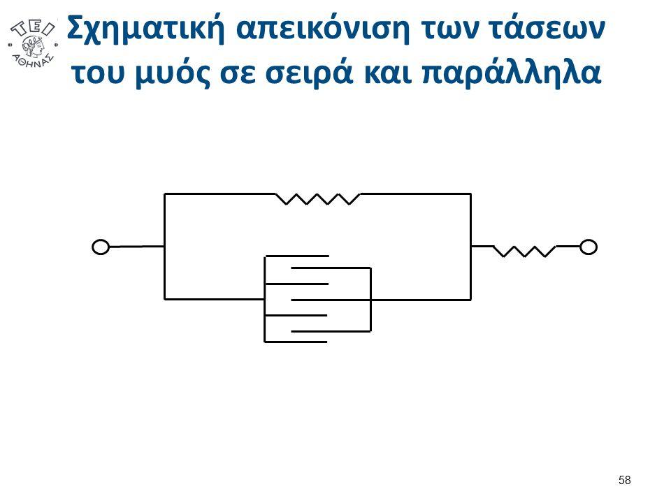 Σχηματική απεικόνιση των τάσεων του μυός σε σειρά και παράλληλα 58