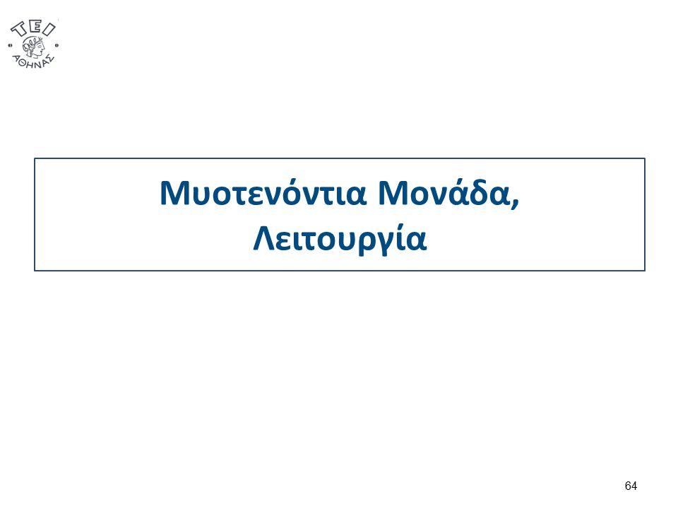 Μυοτενόντια Μονάδα, Λειτουργία 64