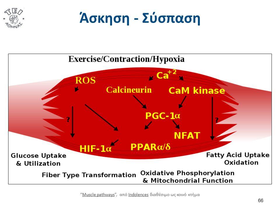 Άσκηση - Σύσπαση 66 Muscle pathways , από Indolences διαθέσιμο ως κοινό κτήμαMuscle pathwaysIndolences