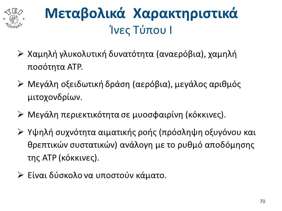 Μεταβολικά Χαρακτηριστικά Ίνες Τύπου Ι  Χαμηλή γλυκολυτική δυνατότητα (αναερόβια), χαμηλή ποσότητα ATP.  Μεγάλη οξειδωτική δράση (αερόβια), μεγάλος