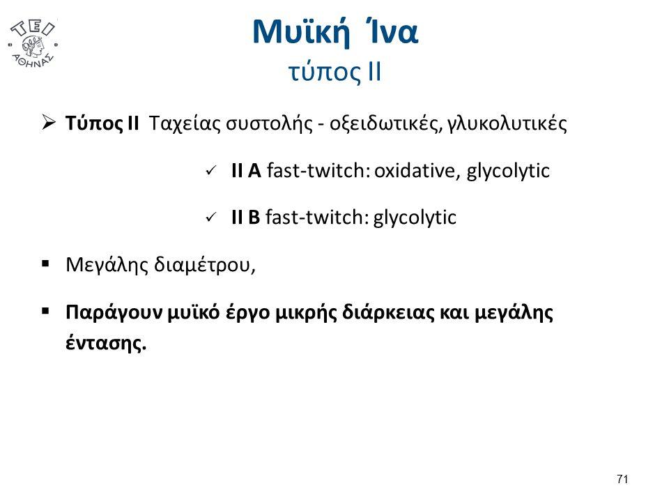 Μυϊκή Ίνα τύπος ΙΙ  Τύπος ΙΙ Ταχείας συστολής - οξειδωτικές, γλυκολυτικές ΙΙ Α fast-twitch: oxidative, glycolytic ΙΙ Β fast-twitch: glycolytic  Μεγάλης διαμέτρου,  Παράγουν μυϊκό έργο μικρής διάρκειας και μεγάλης έντασης.