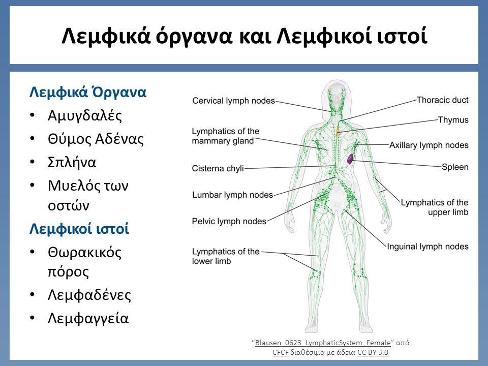 Λεμφικά όργανα και Λεμφικοί ιστοί Λεμφικά Όργανα Αμυγδαλές Θύμος Αδένας Σπλήνα Μυελός των οστών Λεμφικοί ιστοί Θωρακικός πόρος Λεμφαδένες Λεμφαγγεία Blausen_0623_LymphaticSystem_Female από CFCF διαθέσιμο με άδεια CC BY 3.0Blausen_0623_LymphaticSystem_Female CFCFCC BY 3.0