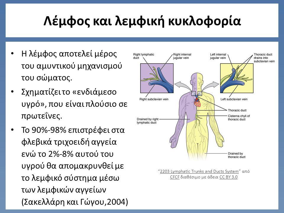Λέμφος και λεμφική κυκλοφορία Η ροή είναι μονοκατευθυντήρια (Oliver G,2004) Εμφανίζεται μέσω ενώ συστήματος χαμηλής πίεσης (Alitalo K., Carmelet P,2002) Lymph capillaries in the tissue spaces από Lennert B διαθέσιμο ως κοινό κτήμαLymph capillaries in the tissue spacesLennert B