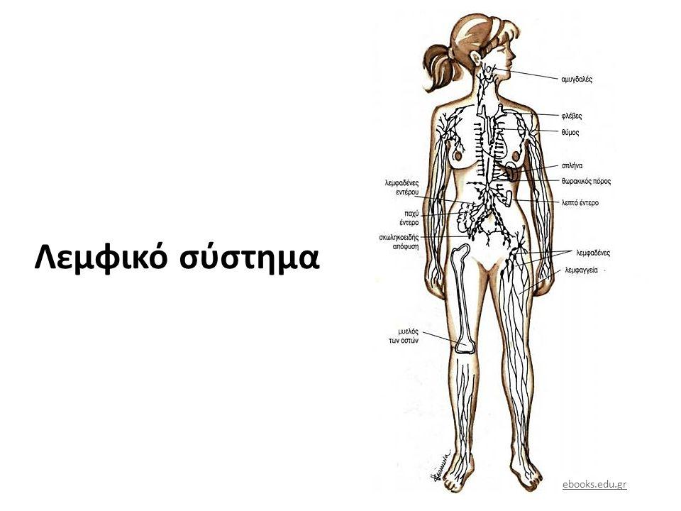 Λεμφικό Σύστημα kinetiks.gr