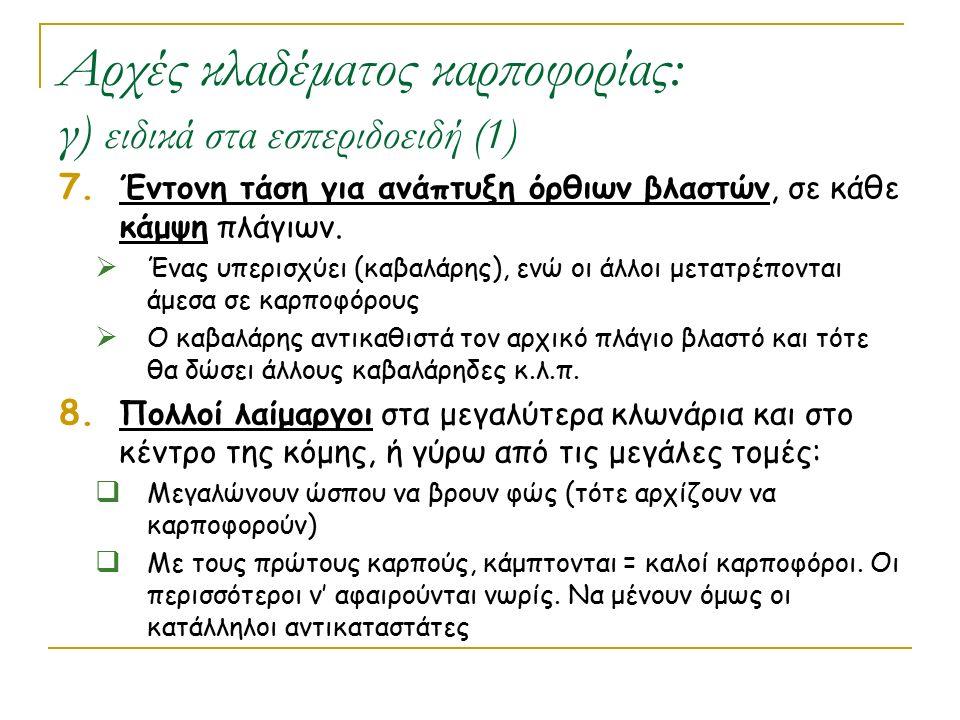Αρχές κλαδέματος καρποφορίας: γ) ειδικά στα εσπεριδοειδή (1) 7. Έντονη τάση για ανάπτυξη όρθιων βλαστών, σε κάθε κάμψη πλάγιων.  Ένας υπερισχύει (καβ