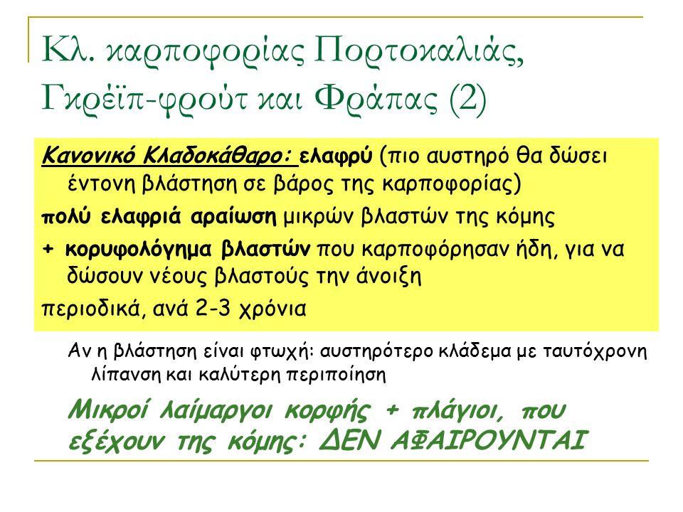 Κλ. καρποφορίας Πορτοκαλιάς, Γκρέϊπ-φρούτ και Φράπας (2) Κανονικό Κλαδοκάθαρο: ελαφρύ (πιο αυστηρό θα δώσει έντονη βλάστηση σε βάρος της καρποφορίας)