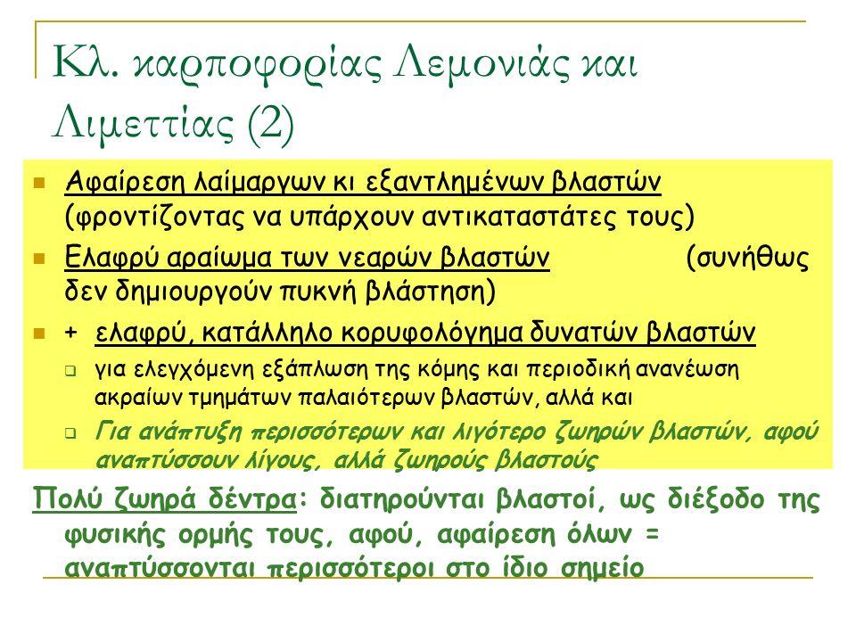 Κλ. καρποφορίας Λεμονιάς και Λιμεττίας (2) Αφαίρεση λαίμαργων κι εξαντλημένων βλαστών (φροντίζοντας να υπάρχουν αντικαταστάτες τους) Ελαφρύ αραίωμα τω