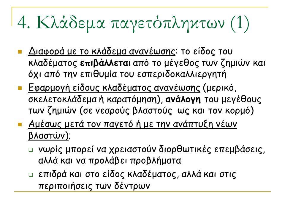 4. Κλάδεμα παγετόπληκτων (1) Διαφορά με το κλάδεμα ανανέωσης: το είδος του κλαδέματος επιβάλλεται από το μέγεθος των ζημιών και όχι από την επιθυμία τ