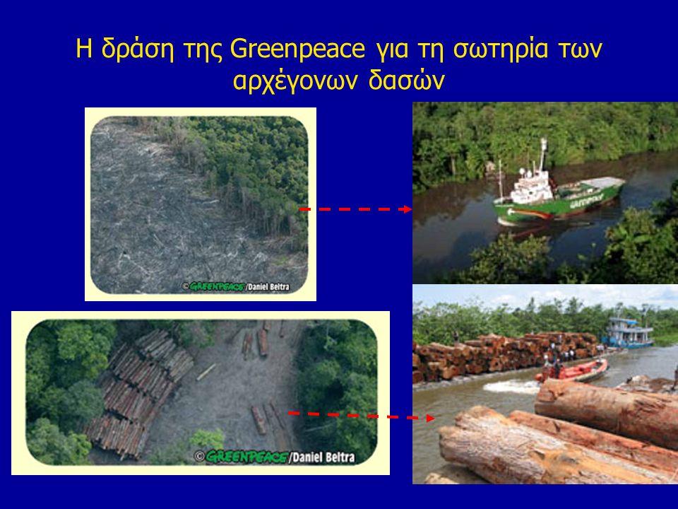 Η δράση της Greenpeace για τη σωτηρία των αρχέγονων δασών