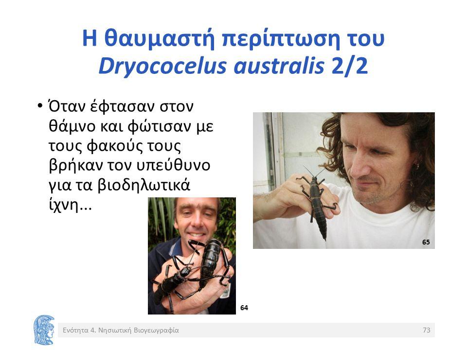 Η θαυμαστή περίπτωση του Dryococelus australis 2/2 Όταν έφτασαν στον θάμνο και φώτισαν με τους φακούς τους βρήκαν τον υπεύθυνο για τα βιοδηλωτικά ίχνη