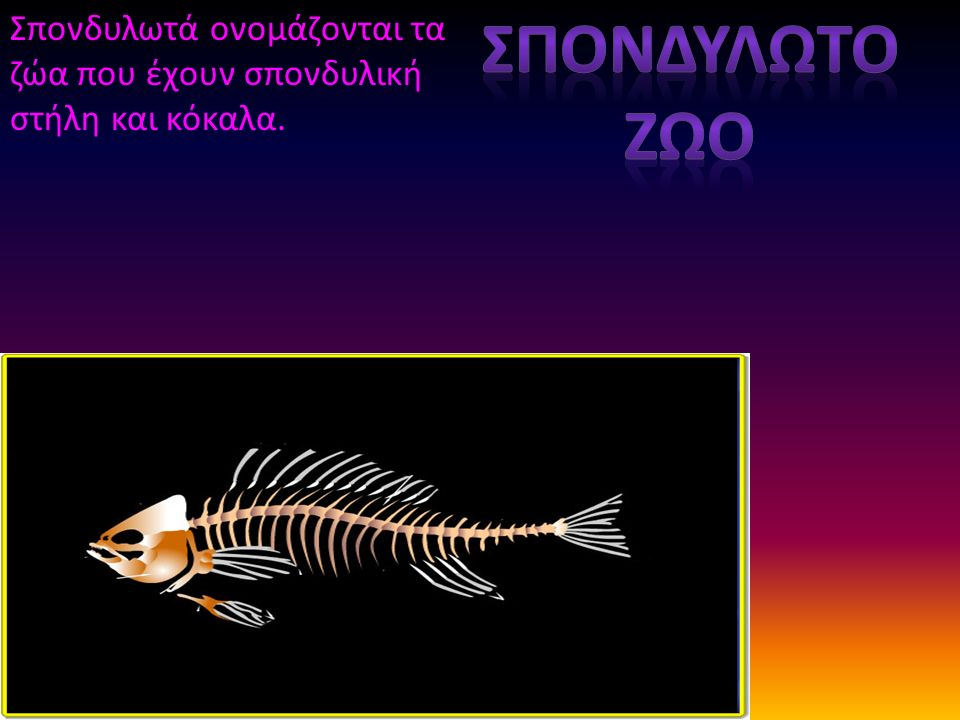 Σπονδυλωτά ονομάζονται τα ζώα που έχουν σπονδυλική στήλη και κόκαλα.