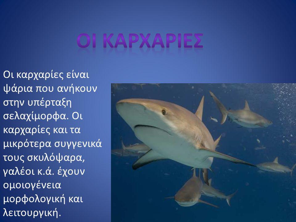 Οι καρχαρίες είναι ψάρια που ανήκουν στην υπέρταξη σελαχίμορφα. Οι καρχαρίες και τα μικρότερα συγγενικά τους σκυλόψαρα, γαλέοι κ.ά. έχουν ομοιογένεια