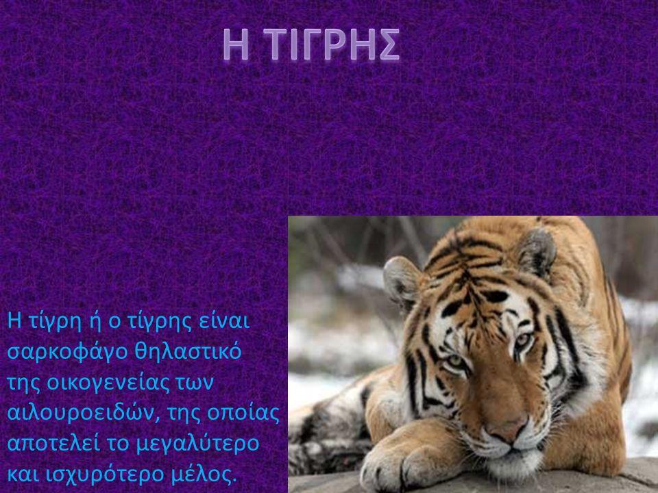 Η τίγρη ή ο τίγρης είναι σαρκοφάγο θηλαστικό της οικογενείας των αιλουροειδών, της οποίας αποτελεί το μεγαλύτερο και ισχυρότερο μέλος.