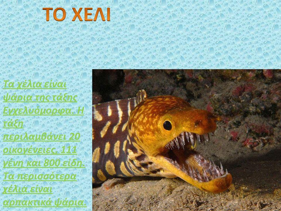 Τα χέλια είναι ψάρια της τάξης Εγχελυόμορφα.