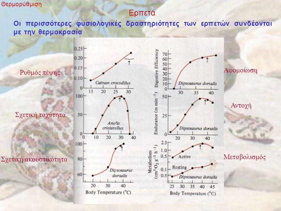 Ερπετά Θερμορύθμιση Οι περισσότερες φυσιολογικές δραστηριότητες των ερπετών συνδέονται με την θερμοκρασία Σχετική ακουστικότητα Σχετική ταχύτητα Ρυθμός πέψης Αφομοίωση Αντοχή Μεταβολισμός