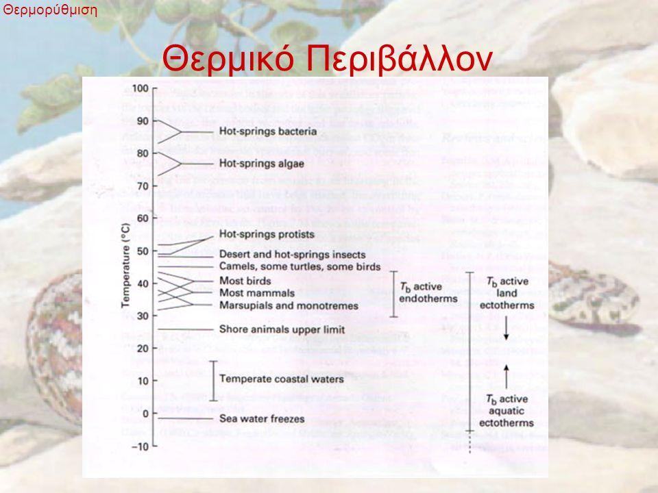 Ενδοθερμία - Εξωθερμία Θερμορύθμιση