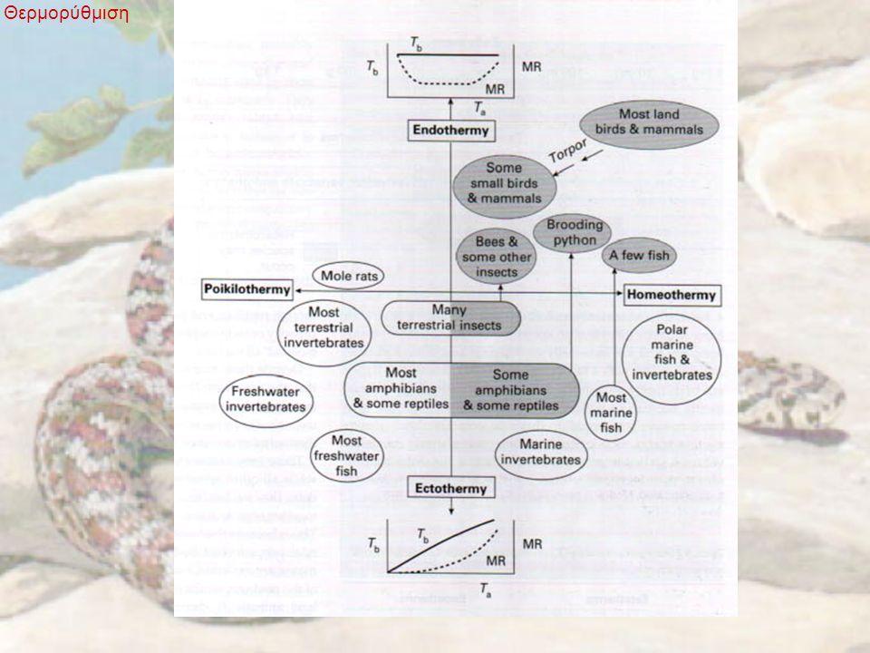 Ρύθμιση της θερμοκρασίας του σώματος Θερμορύθμιση Έλεγχος στο κέρδος θερμότητας Α.