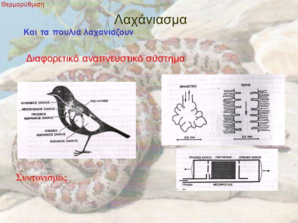 Λαχάνιασμα Θερμορύθμιση Και τα πουλιά λαχανιάζουν Διαφορετικό αναπνευστικό σύστημα Συντονισμός