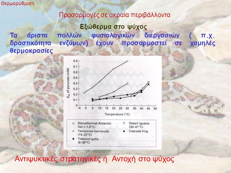 Προσαρμογές σε ακραία περιβάλλοντα Θερμορύθμιση Εξώθερμα στο ψύχος Τα άριστα πολλών φυσιολογικών διεργασιών ( π. χ. δραστικότητα ενζύμων ) έχουν προσα