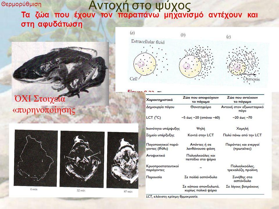 Αντοχή στο ψύχος Θερμορύθμιση Τα ζώα που έχουν τον παραπάνω μηχανισμό αντέχουν και στη αφυδάτωση ΌΧΙ Στοιχεία «πυρηνοποίησης