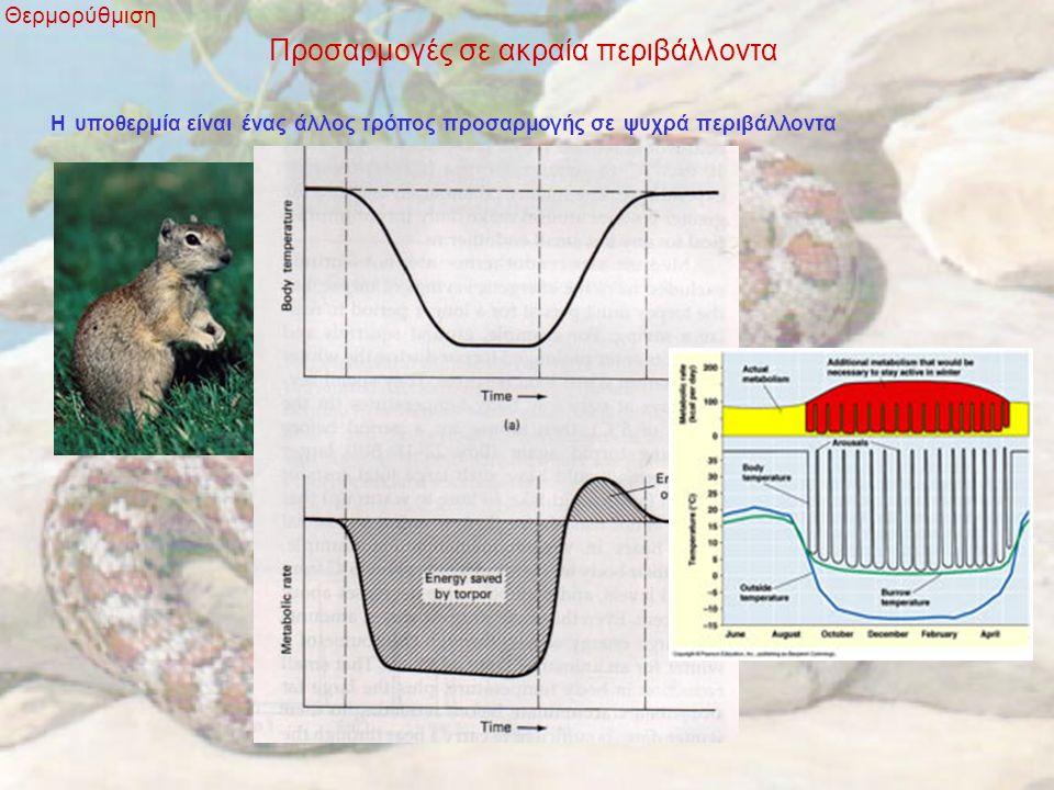 Προσαρμογές σε ακραία περιβάλλοντα Θερμορύθμιση Η υποθερμία είναι ένας άλλος τρόπος προσαρμογής σε ψυχρά περιβάλλοντα