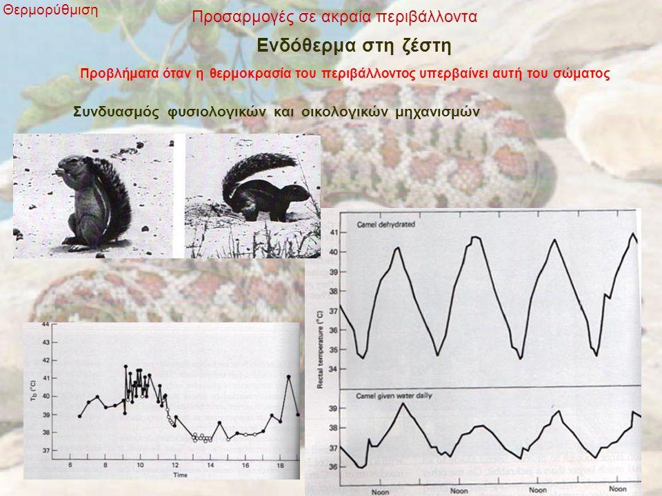 Προσαρμογές σε ακραία περιβάλλοντα Θερμορύθμιση Ενδόθερμα στη ζέστη Προβλήματα όταν η θερμοκρασία του περιβάλλοντος υπερβαίνει αυτή του σώματος Συνδυασμός φυσιολογικών και οικολογικών μηχανισμών