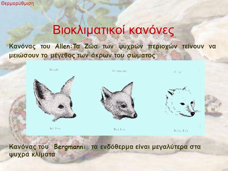 Βιοκλιματικοί κανόνες Θερμορύθμιση Κανόνας του Allen: Τα Ζώα των ψυχρών περιοχών τείνουν να μειώσουν το μέγεθος των άκρων του σώματος Κανόνας του Berg