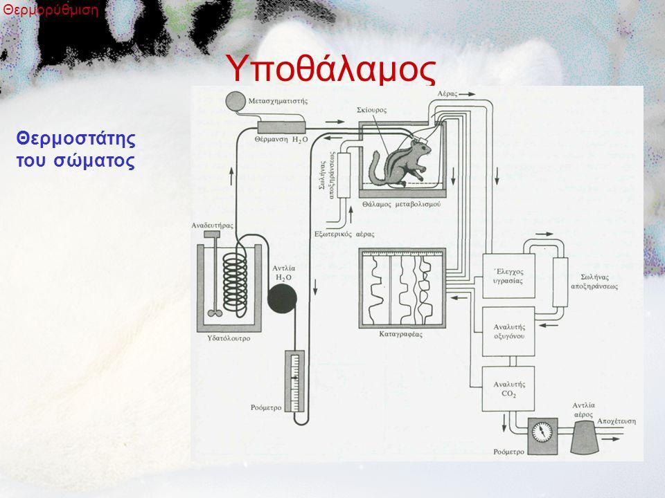 Υποθάλαμος Θερμορύθμιση Θερμοστάτης του σώματος