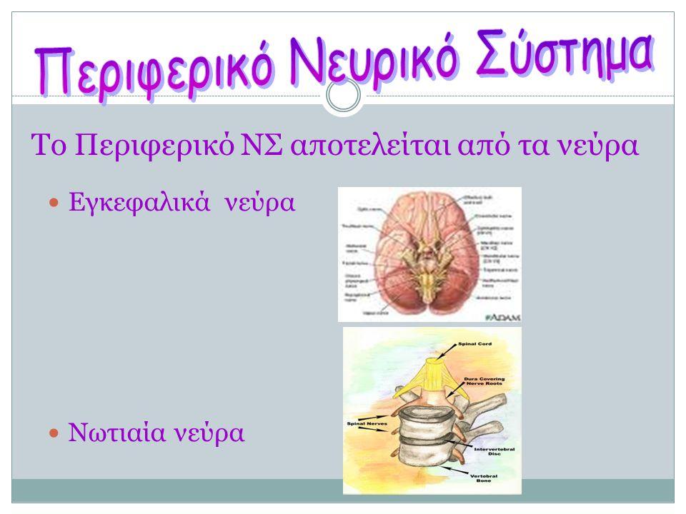 Ποια είναι τα είδη των νευρικών οδών; Νευρική οδός Νευρική οδός είναι η διαδρομή που ακολουθούν οι νευρικές ώσεις μέσα στο νευρικό σύστημα.