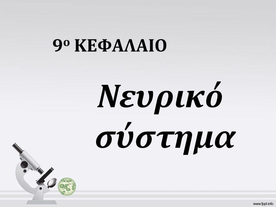 9 ο ΚΕΦΑΛΑΙΟ Νευρικό σύστημα