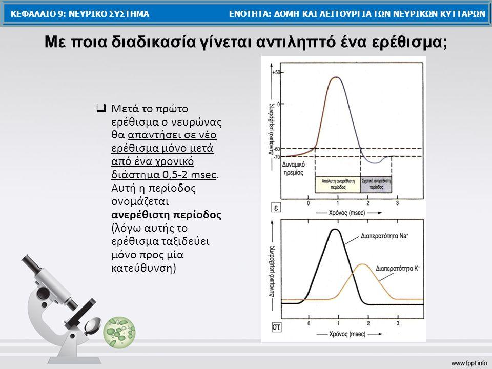 Μετά το πρώτο ερέθισμα ο νευρώνας θα απαντήσει σε νέο ερέθισμα μόνο μετά από ένα χρονικό διάστημα 0,5-2 msec. Αυτή η περίοδος ονομάζεται ανερέθιστη