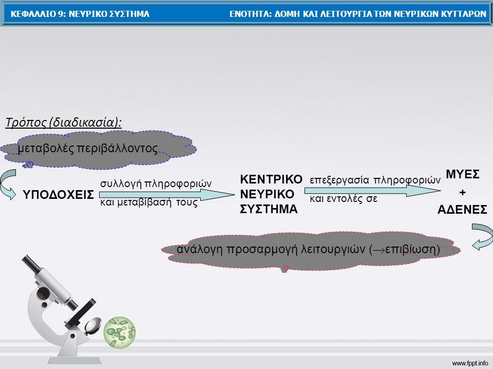 Τρόπος (διαδικασία): ΥΠΟΔΟΧΕΙΣ συλλογή πληροφοριών και μεταβίβασή τους ΚΕΝΤΡΙΚΟ ΝΕΥΡΙΚΟ ΣΥΣΤΗΜΑ επεξεργασία πληροφοριών και εντολές σε ΜΥΕΣ + ΑΔΕΝΕΣ μεταβολές περιβάλλοντος ανάλογη προσαρμογή λειτουργιών (  επιβίωση) ΚΕΦΑΛΑΙΟ 9: ΝΕΥΡΙΚΟ ΣΥΣΤΗΜΑ ΕΝΟΤΗΤΑ: ΔΟΜΗ ΚΑΙ ΛΕΙΤΟΥΡΓΙΑ ΤΩΝ ΝΕΥΡΙΚΩΝ ΚΥΤΤΑΡΩΝ