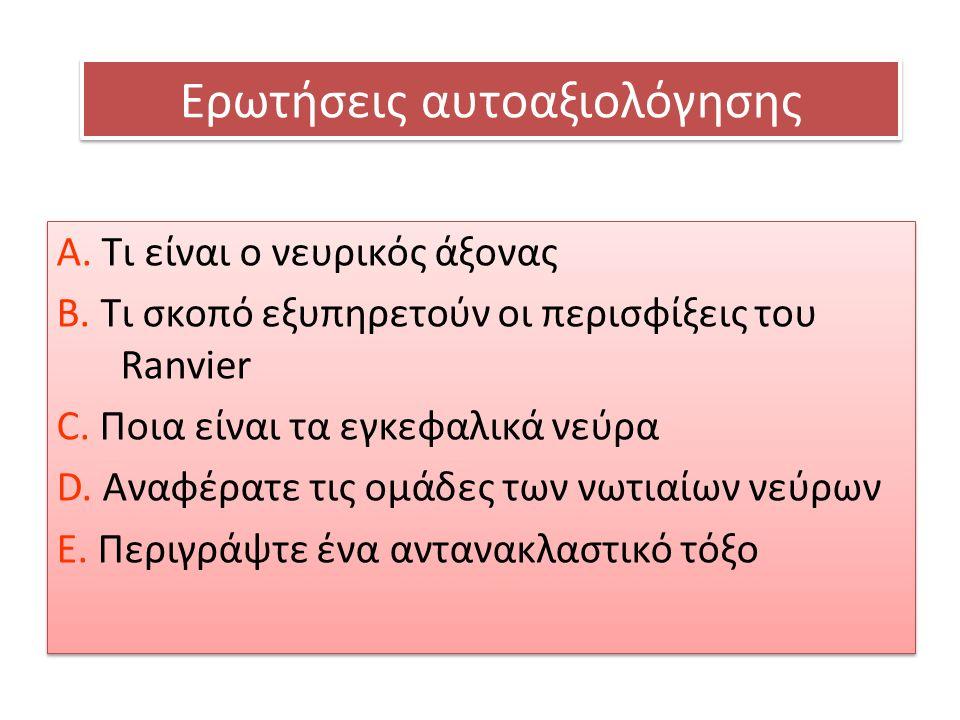 Ερωτήσεις αυτοαξιολόγησης A. Τι είναι ο νευρικός άξονας Β. Τι σκοπό εξυπηρετούν οι περισφίξεις του Ranvier C. Ποια είναι τα εγκεφαλικά νεύρα D. Αναφέρ
