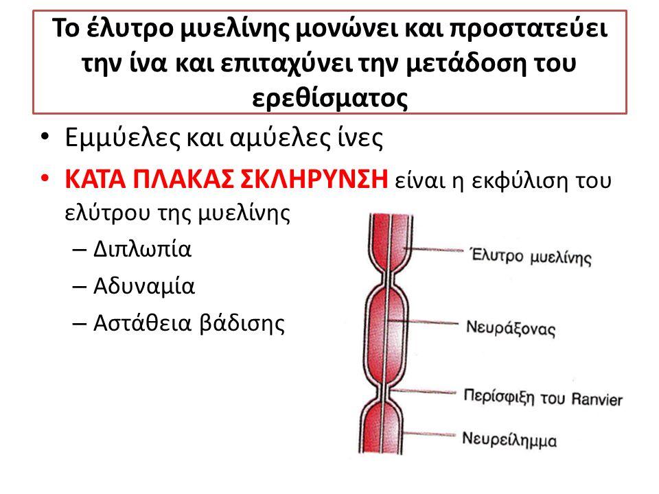 Το έλυτρο μυελίνης μονώνει και προστατεύει την ίνα και επιταχύνει την μετάδοση του ερεθίσματος Εμμύελες και αμύελες ίνες ΚΑΤΑ ΠΛΑΚΑΣ ΣΚΛΗΡΥΝΣΗ είναι η