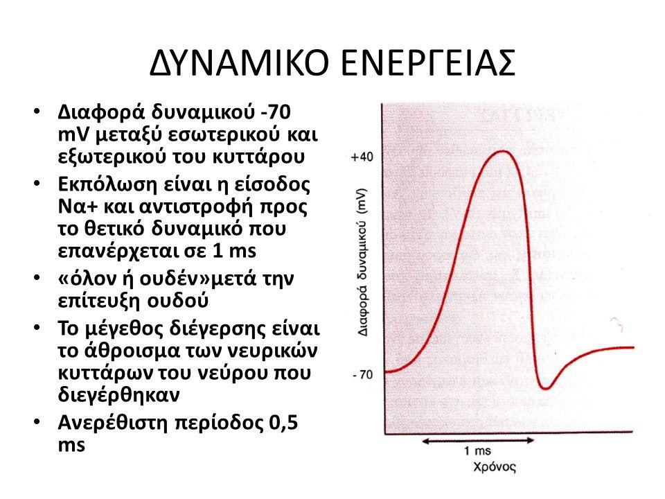 ΔΥΝΑΜΙΚΟ ΕΝΕΡΓΕΙΑΣ Διαφορά δυναμικού -70 mV μεταξύ εσωτερικού και εξωτερικού του κυττάρου Εκπόλωση είναι η είσοδος Να+ και αντιστροφή προς το θετικό δ